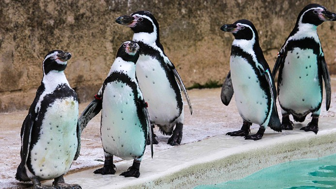 Celebrate World Penguin Day in The Cotswolds